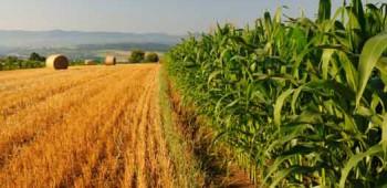 Agricoltura-veneta